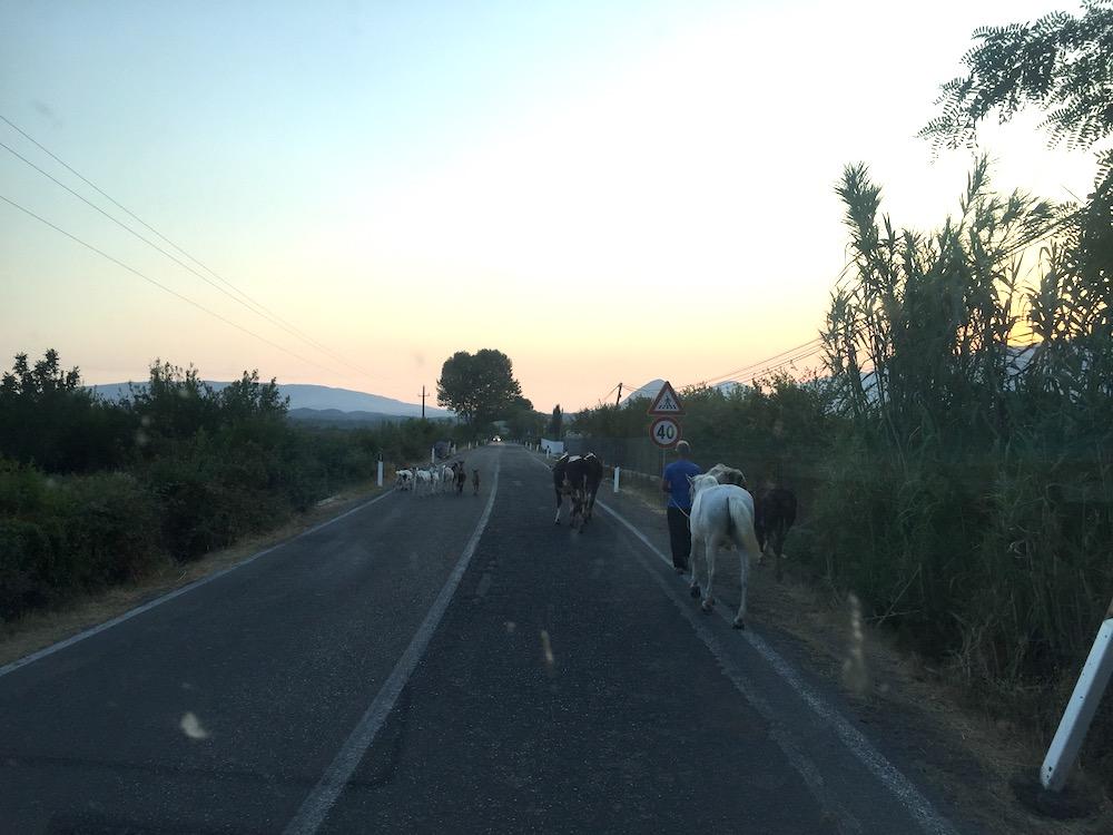 albanija z avtodomom