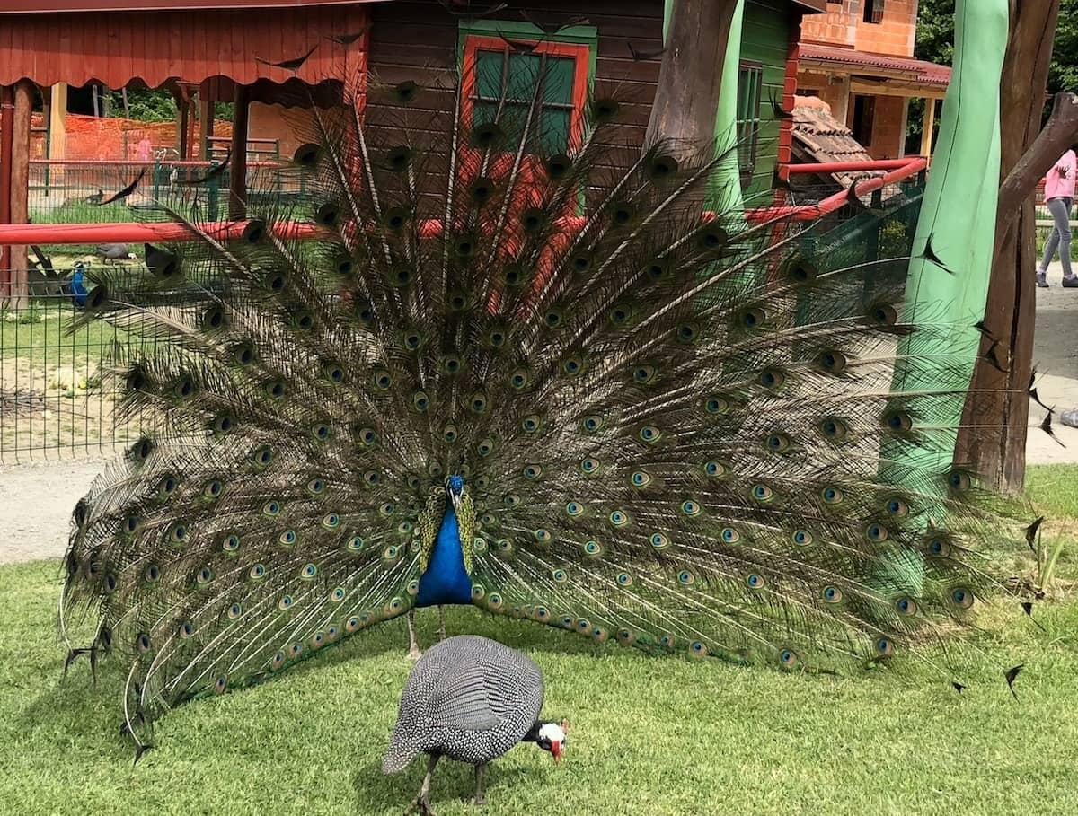 živalski vrt SikaloZOO